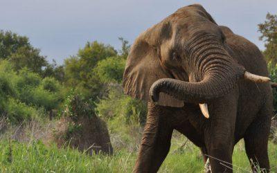 Odstraszam agresywne słonie czyli dlaczego tak trudno poradzić sobie z perfekcjonizmem?