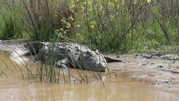 Nie jesteśmy tu poto, bywybić wszystkie krokodyle