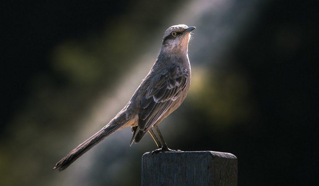 Ptak smukleje gdy śpiewa, człowiek rośnie, gdy tworzy